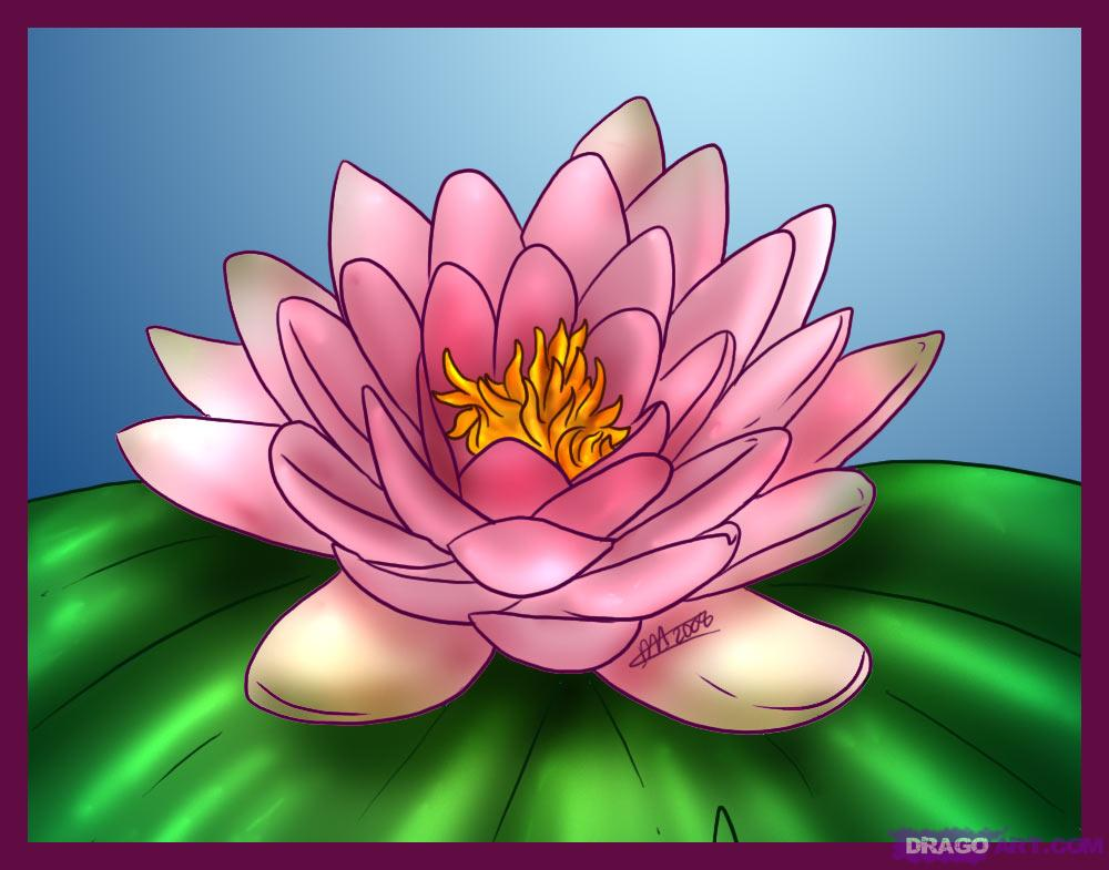 how-to-draw-a-lotus-water-lily_1_000000000917_5